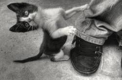 من ركل القطه