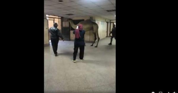 """""""الصحة"""": فتح تحقيق في واقعة اقتحام جمل مستشفى أوسيم"""