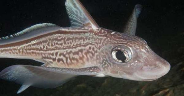 الصحة: سمكة الأرنب الأشد فتكا بالعالم.. ولا يوجد لسمها مصل