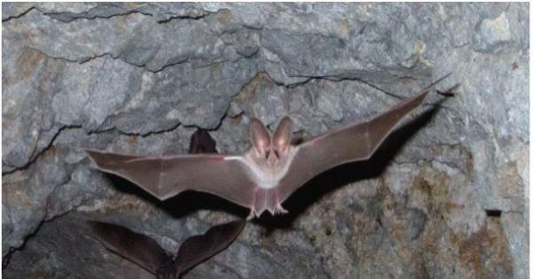 تحذير من فيروس تحمله الخفافيش أشد فتكا من كورونا: يصيب ضحاياه بالشلل