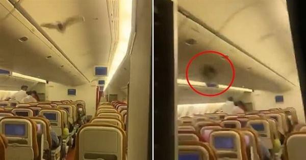 في منتصف الرحلة.. خفاش يجبر طائرة على الهبوط الاضطراري|فيديو