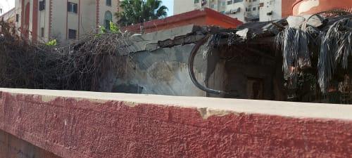 زواحف مفترسة وبقايا طيور نافقة.. كارثة تهدد طلاب مدرسة ببورسعيد ومطالب بسرعة التدخل